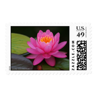 Sello rosado de Lotus