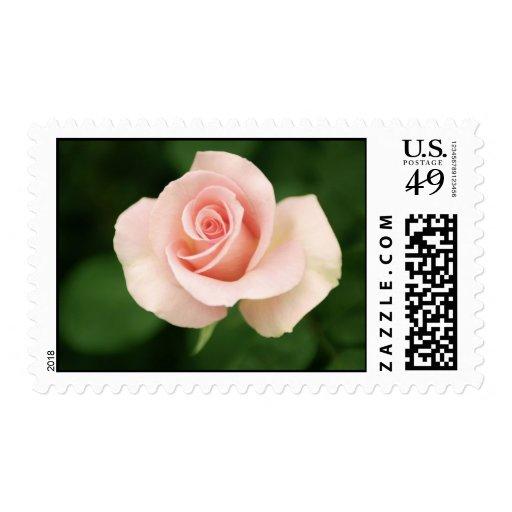 Sello rosado del rosa