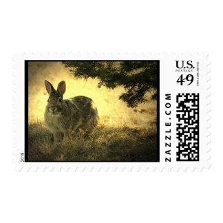 Sello salvaje del conejo