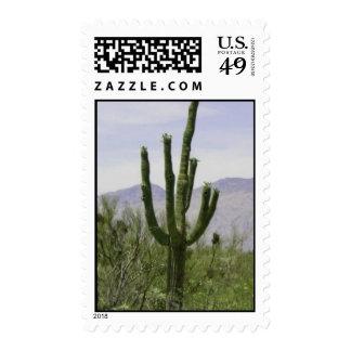 Sello solitario del Saguaro