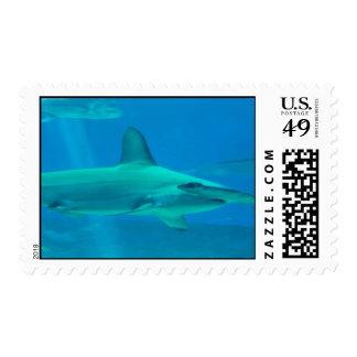 Sello subacuático del tiburón de Hammerhead