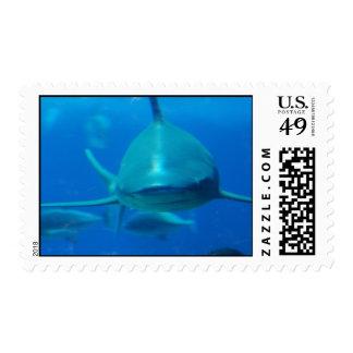 Sello subacuático del tiburón