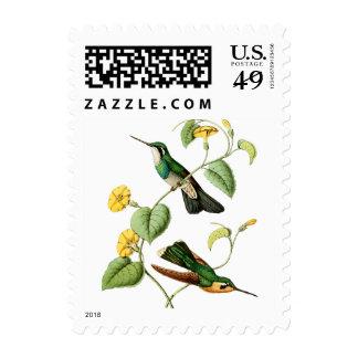 Sello Throated blanco del colibrí de la gema de la