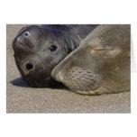 Sello y perrito septentrionales de elefante tarjeta de felicitación