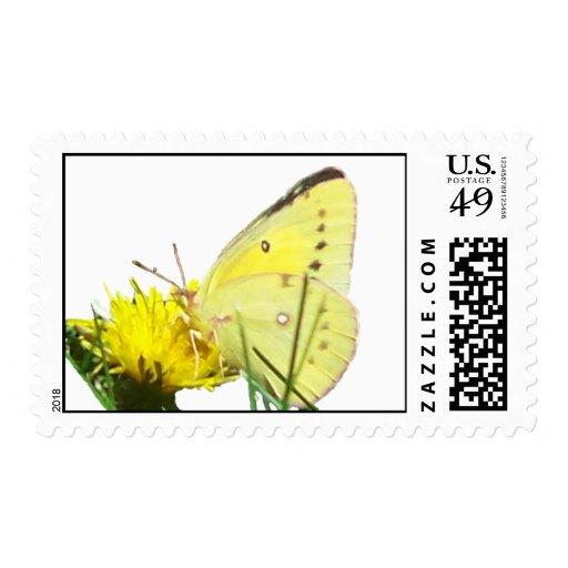 Sellos 1 de la mariposa