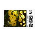 Sellos amarillos colgantes de las orquídeas