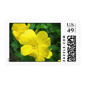 Sellos amarillos de la flor