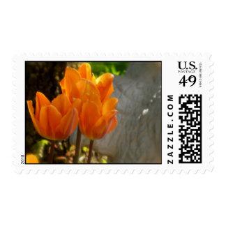 Sellos anaranjados de los tulipanes