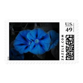 """""""Sellos azules de la flor del flor de la noche"""" Envio"""