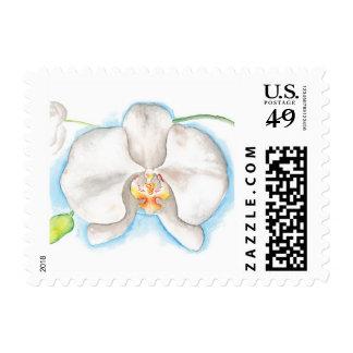 Sellos blancos de la orquídea del Cymbidium de la