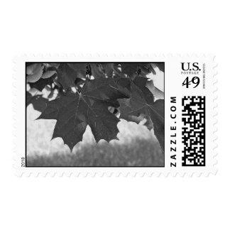 Sellos blancos y negros de las hojas de arce