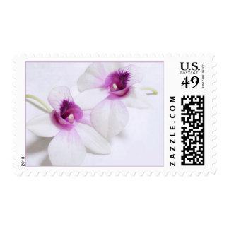 Sellos blancos y púrpuras de la orquídea