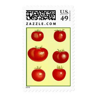 Sellos botánicos de los tomates del tomate maduro