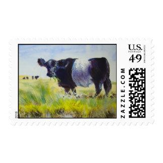 Sellos ceñidos de la vaca de Galloway