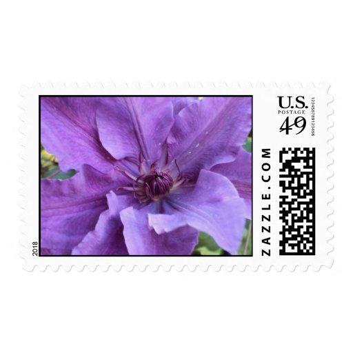 Sellos - Clematis púrpura