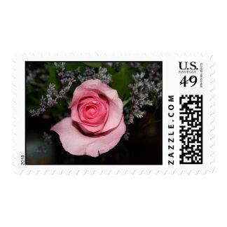 sellos color de rosa rosados