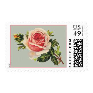 Sellos color de rosa rosados del vintage
