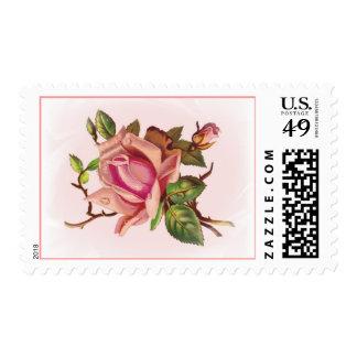 Sellos color de rosa rosados suaves