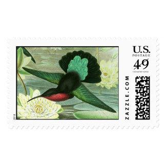 Sellos coloridos del colibrí de Gould grandes