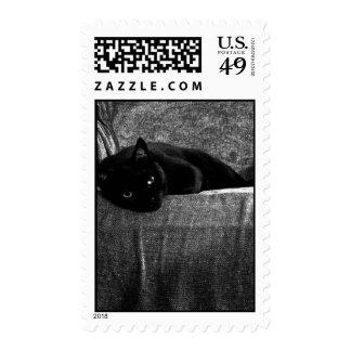Sellos cómodos del gato negro