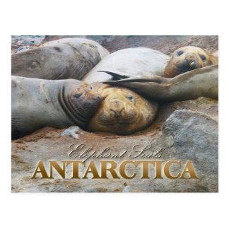Sellos de elefante meridionales, península antárti postal