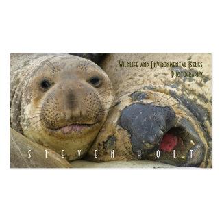 Sellos de elefante septentrionales tarjetas de visita