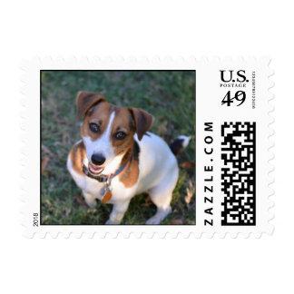 Sellos de Jack Russell Terrier