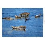 Sellos de la bahía de Monterey Felicitaciones