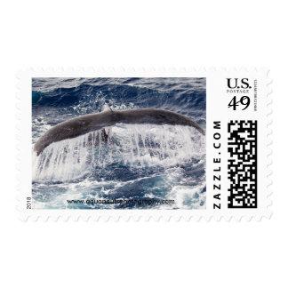 Sellos de la cascada de la cola de la ballena