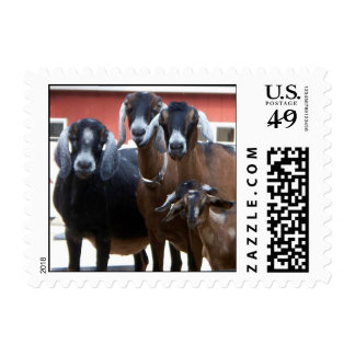 Sellos de la familia de la cabra (PEQUEÑOS)