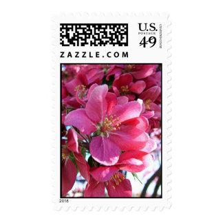 Sellos de la flor de cerezo