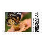 Sellos de la mariposa del Lacewing