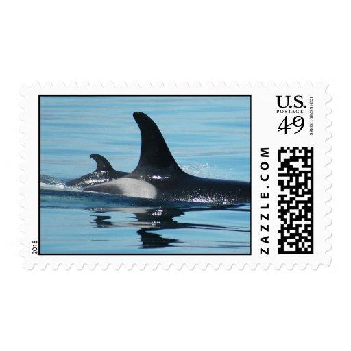 Sellos de la orca de la mamá y del bebé