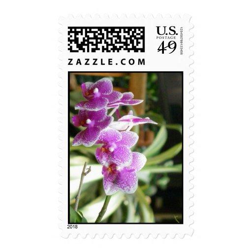 sellos de la orquídea
