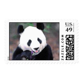 Sellos de la panda