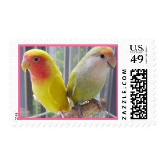 Sellos de la pelea de los pájaros del amor