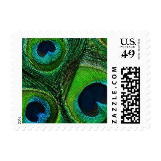 Sellos de la pluma del pavo real - aguamarina verd