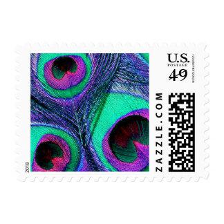 Sellos de la pluma del pavo real - rosa púrpura de