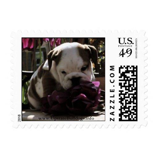 sellos de la primavera de www.UpstateBulldogs.info