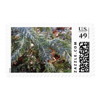 Sellos de la primera clase de Cypress Frost