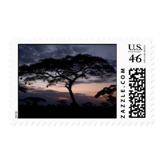 Sellos de la puesta del sol de los acacias
