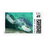 Sellos de la tortuga de mar verde