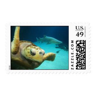 Sellos de la tortuga y del tiburón de mar