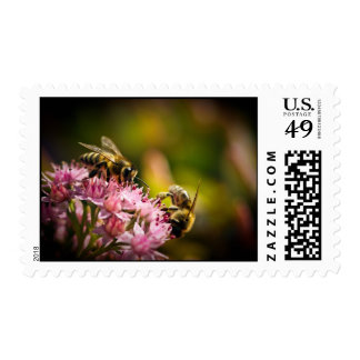 Sellos de las abejas de la miel