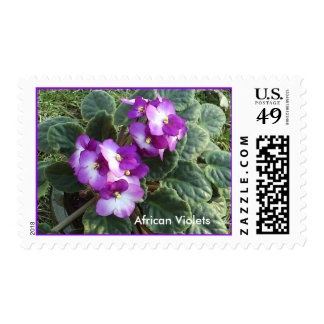 Sellos de las violetas africanas
