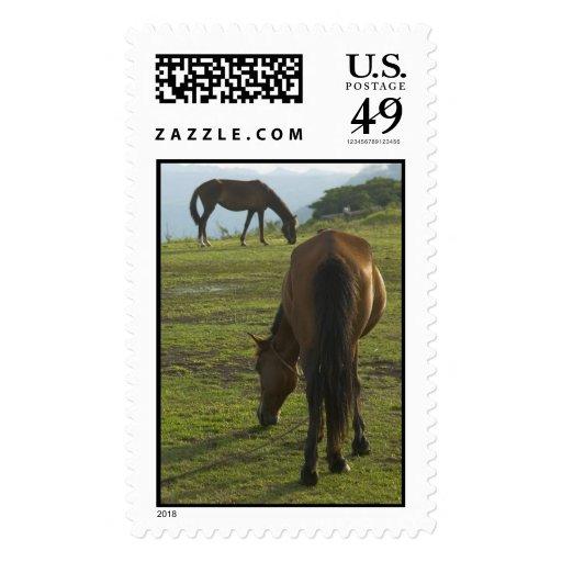 Sellos de los caballos de Brown (2)