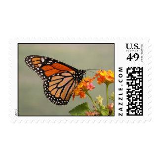 Sellos de los E.E.U.U. de la mariposa de monarca