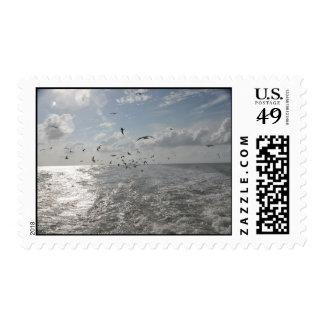 Sellos de los pájaros/del océano