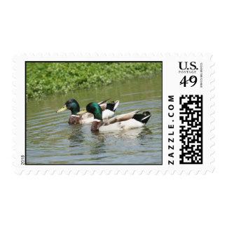 Sellos de los patos silvestres