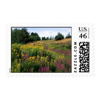 Sellos de los Wildflowers de Canadá
